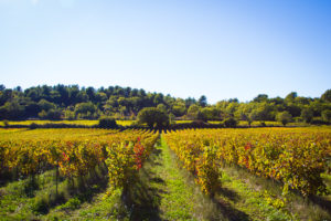 Countryside autumn walks in Provence